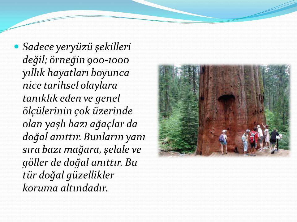 Sadece yeryüzü şekilleri değil; örneğin 900-1000 yıllık hayatları boyunca nice tarihsel olaylara tanıklık eden ve genel ölçülerinin çok üzerinde olan yaşlı bazı ağaçlar da doğal anıttır.