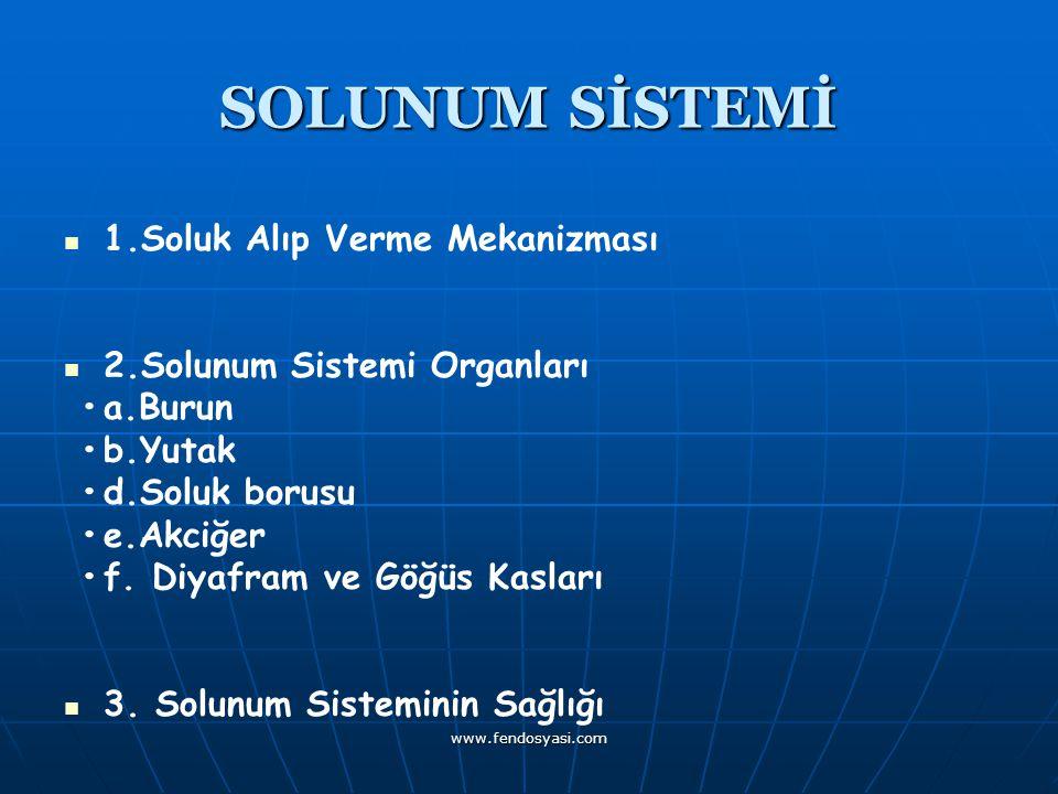 SOLUNUM SİSTEMİ 1.Soluk Alıp Verme Mekanizması