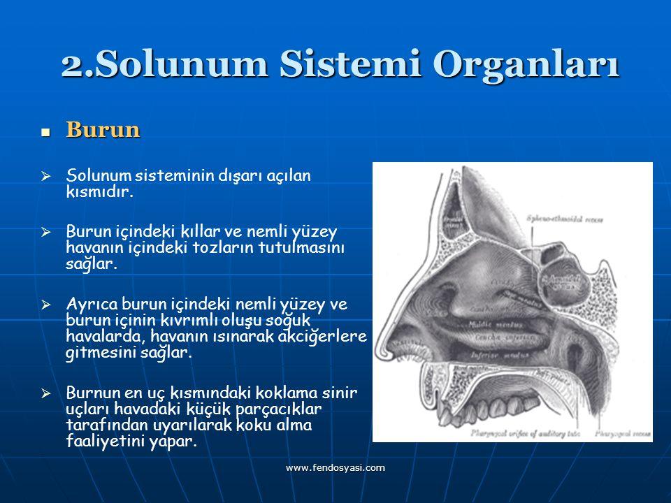 2.Solunum Sistemi Organları