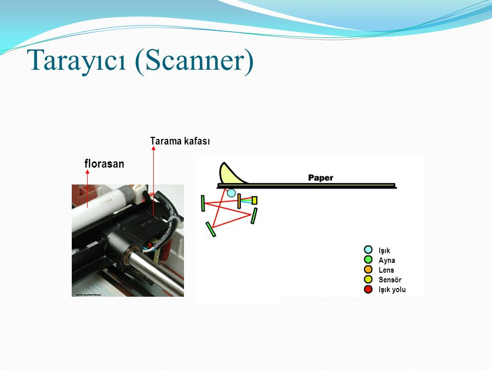Tarayıcı (Scanner) florasan Tarama kafası Işık Ayna Lens Sensör