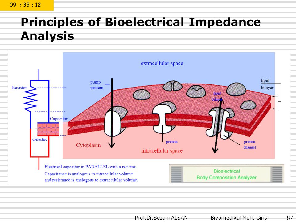 Principles of Bioelectrical Impedance Analysis