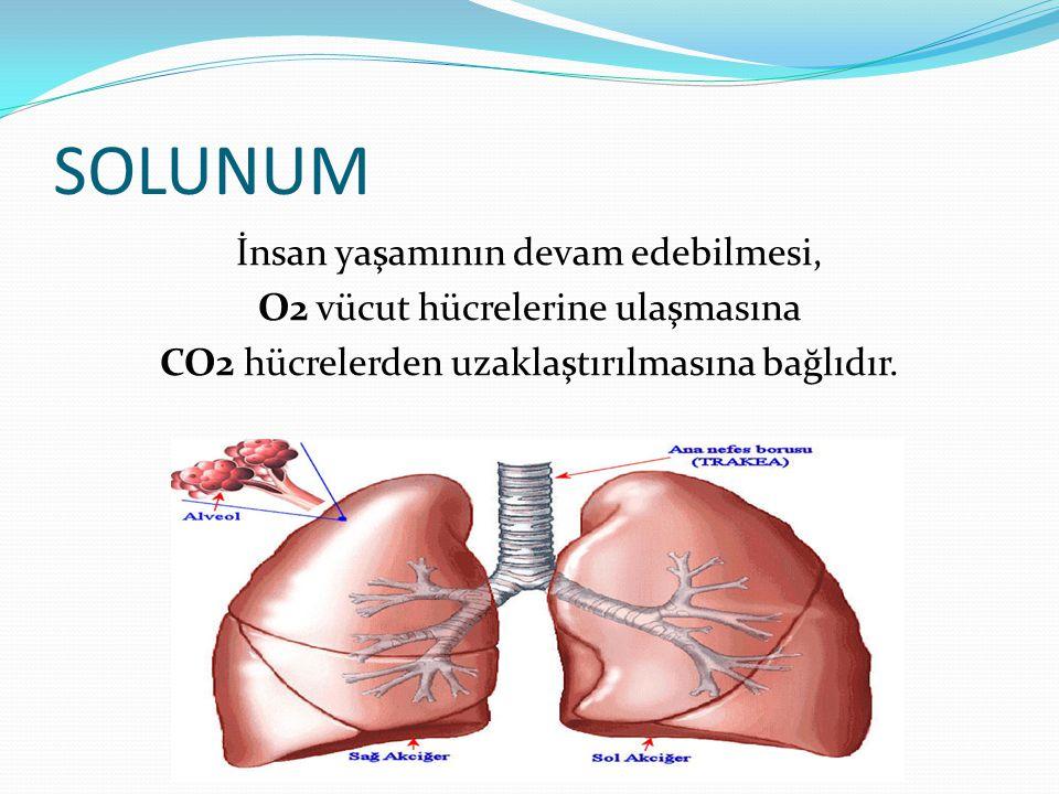 SOLUNUM İnsan yaşamının devam edebilmesi, O2 vücut hücrelerine ulaşmasına CO2 hücrelerden uzaklaştırılmasına bağlıdır.