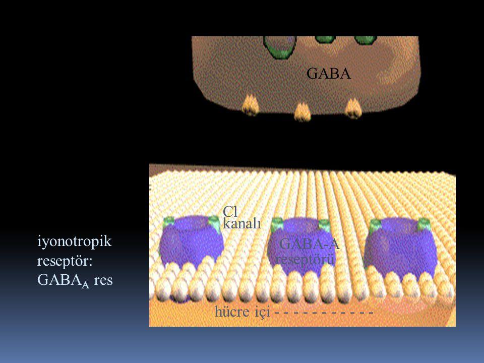 presinaptik terminal. sinaps. postsinaptik. membran. iyonotropik. reseptör: GABAA res. GABA.