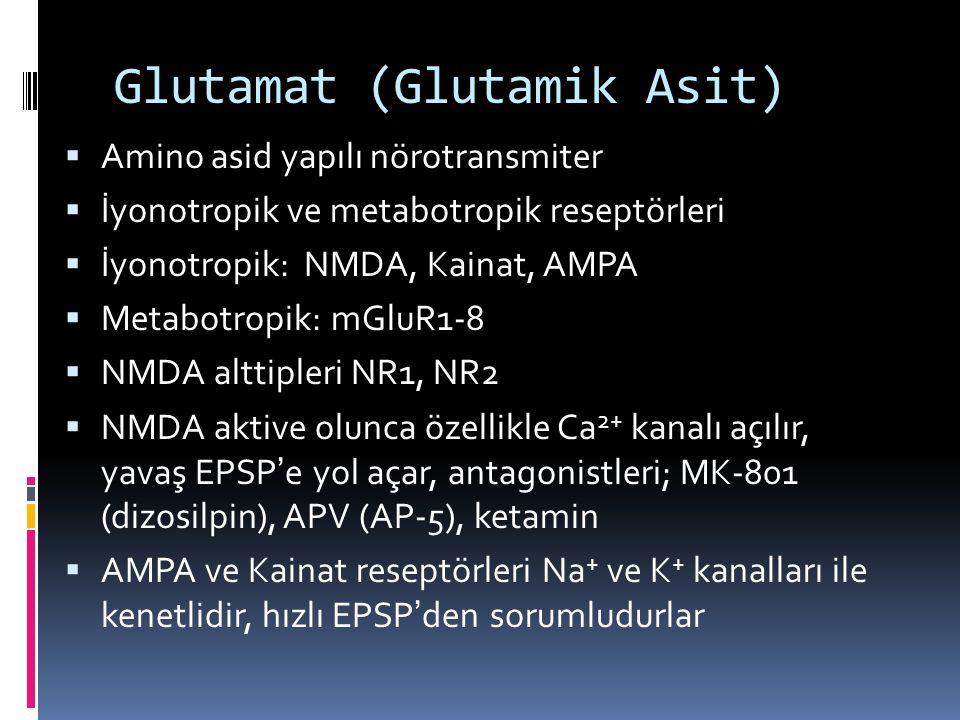 Glutamat (Glutamik Asit)