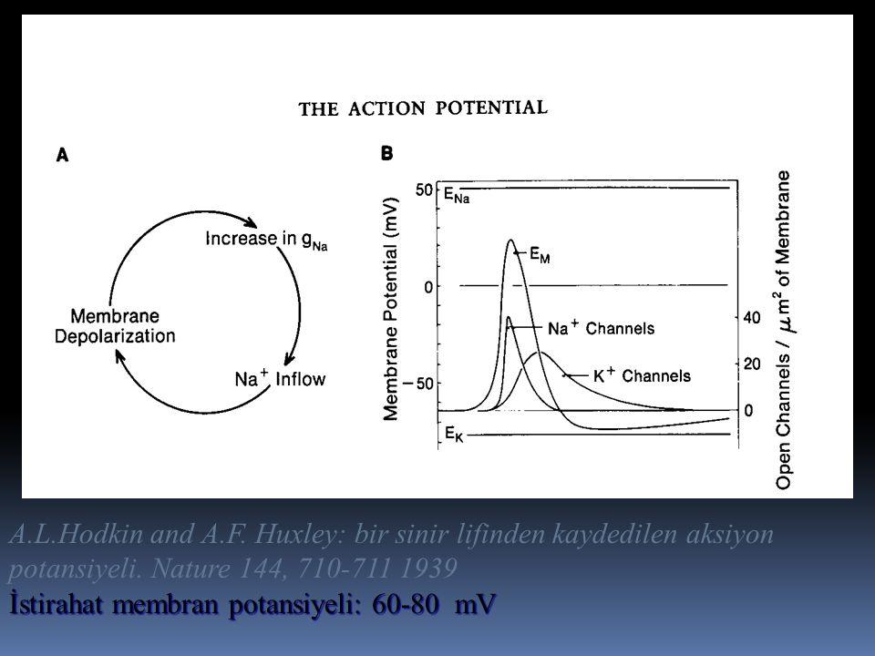 A.L.Hodkin and A.F. Huxley: bir sinir lifinden kaydedilen aksiyon potansiyeli. Nature 144, 710-711 1939