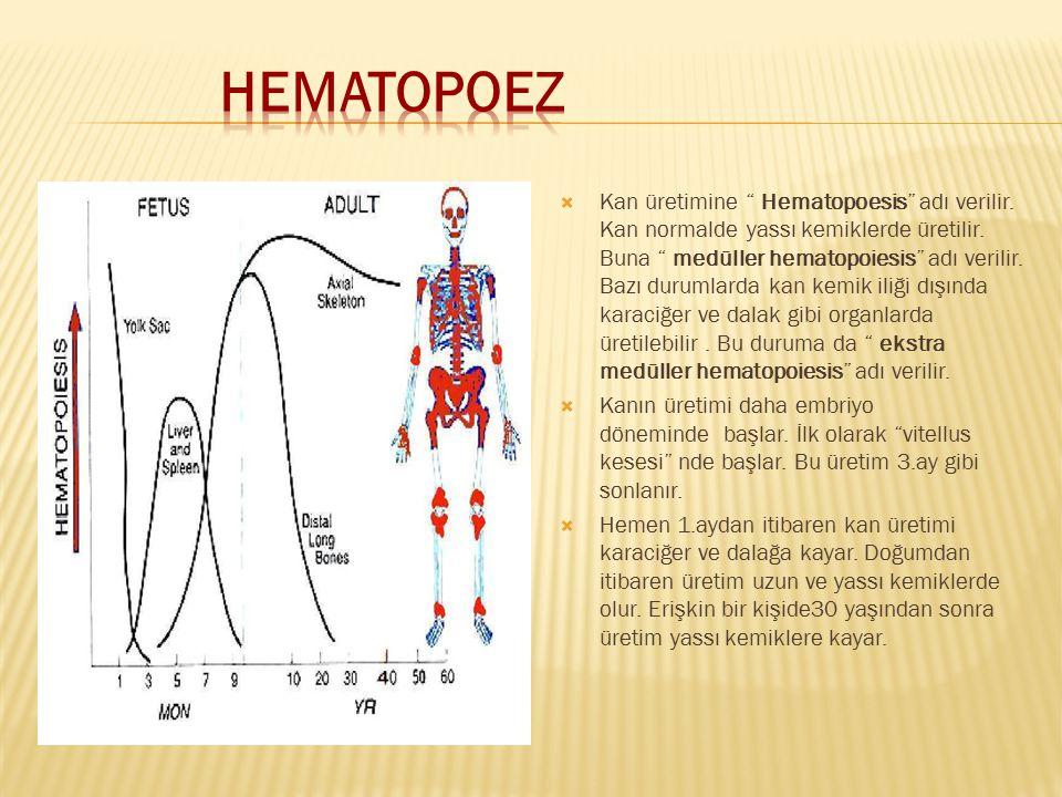 HEMATOPOEZ