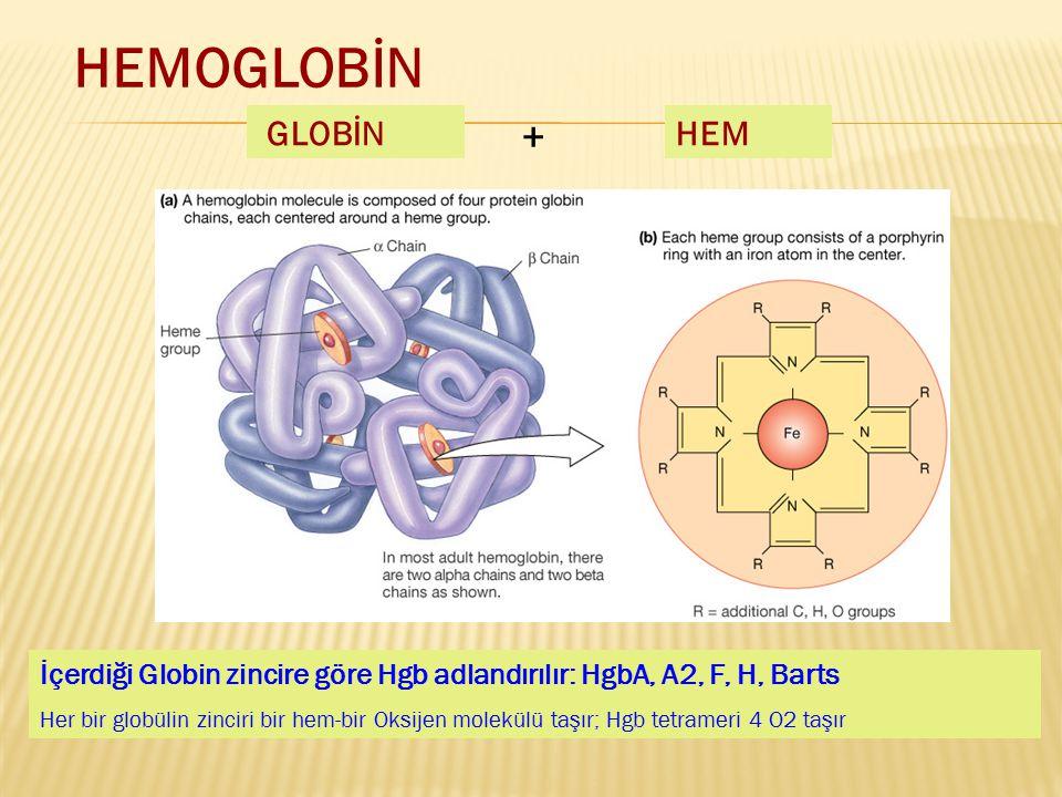 HEMOGLOBİN GLOBİN. + HEM. İçerdiği Globin zincire göre Hgb adlandırılır: HgbA, A2, F, H, Barts.