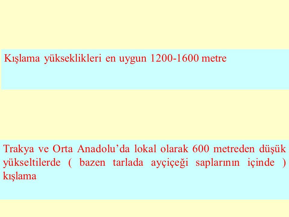 Kışlama yükseklikleri en uygun 1200-1600 metre