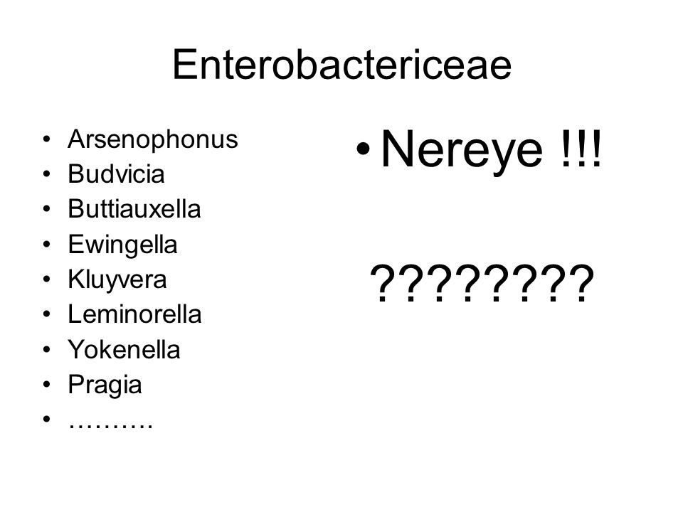 Nereye !!! Enterobactericeae Arsenophonus Budvicia
