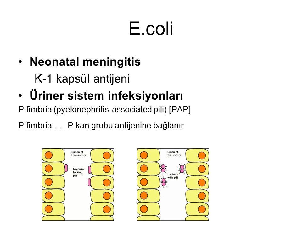 E.coli Neonatal meningitis K-1 kapsül antijeni