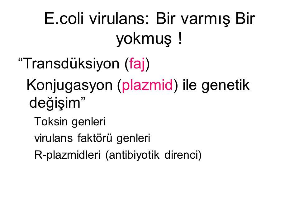 E.coli virulans: Bir varmış Bir yokmuş !