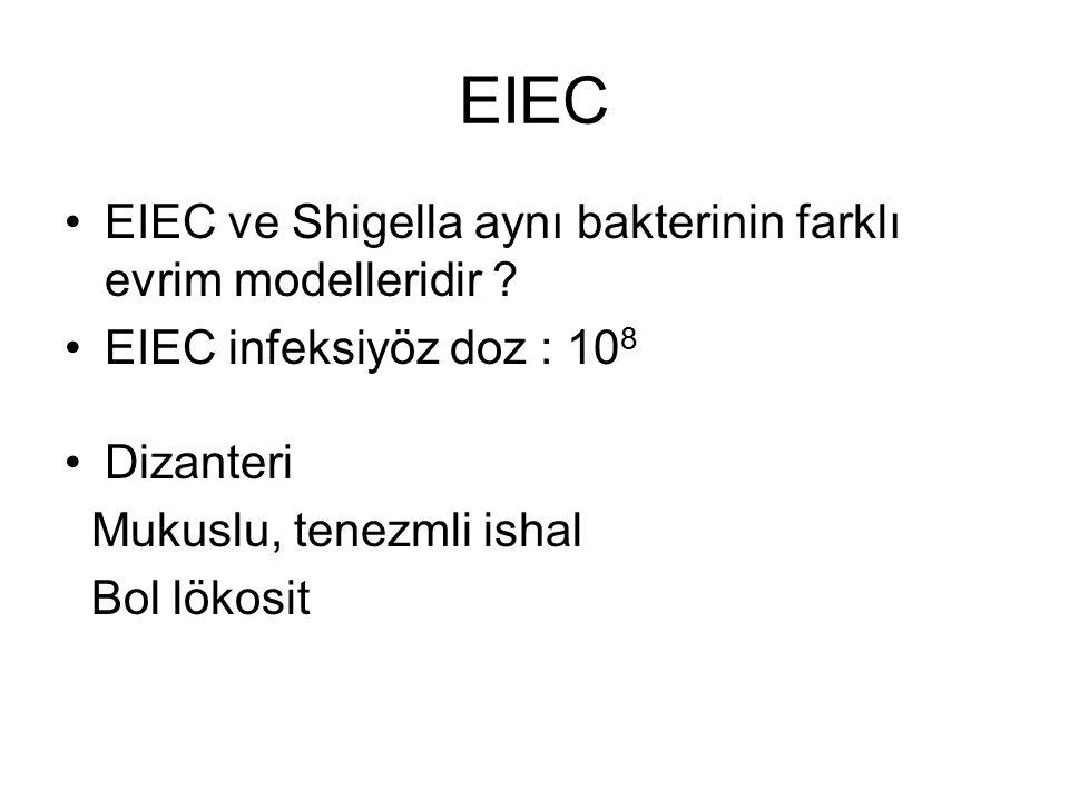 EIEC EIEC ve Shigella aynı bakterinin farklı evrim modelleridir