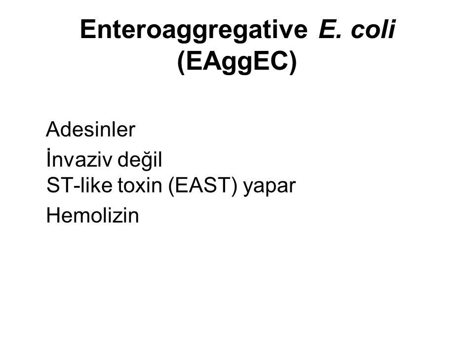Enteroaggregative E. coli (EAggEC)