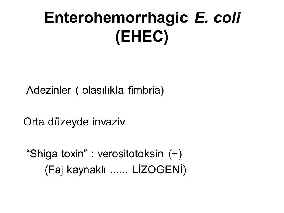 Enterohemorrhagic E. coli (EHEC)