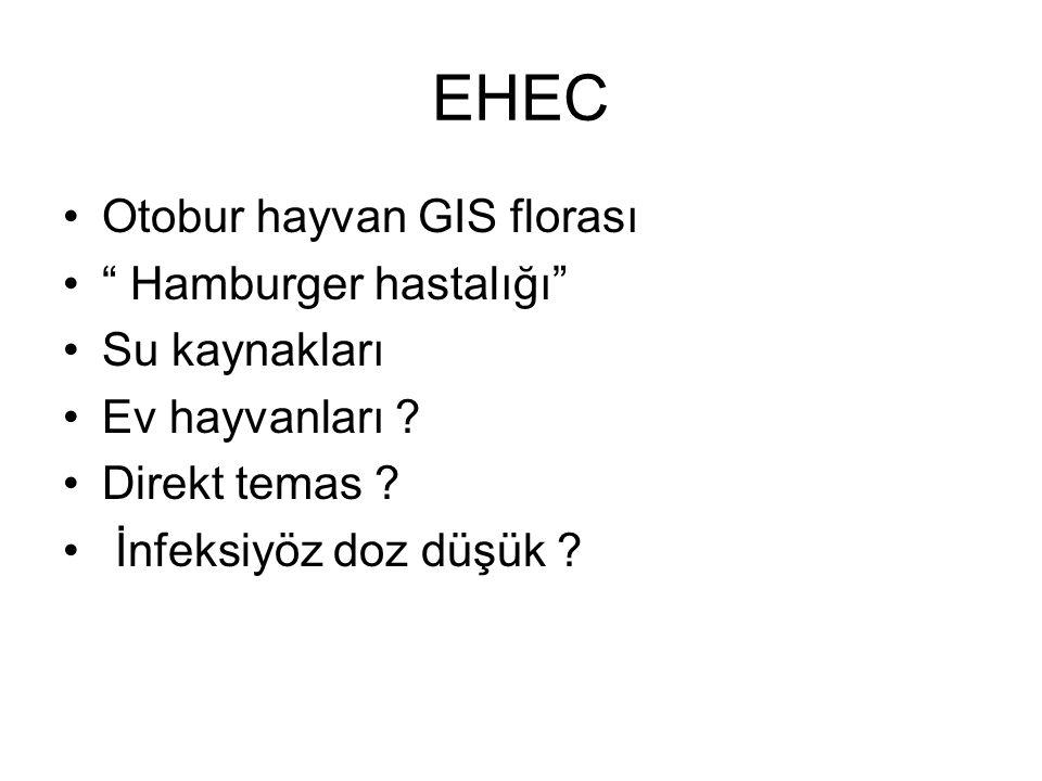 EHEC Otobur hayvan GIS florası Hamburger hastalığı Su kaynakları