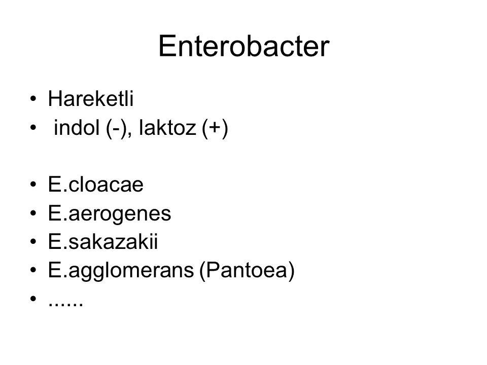 Enterobacter Hareketli indol (-), laktoz (+) E.cloacae E.aerogenes
