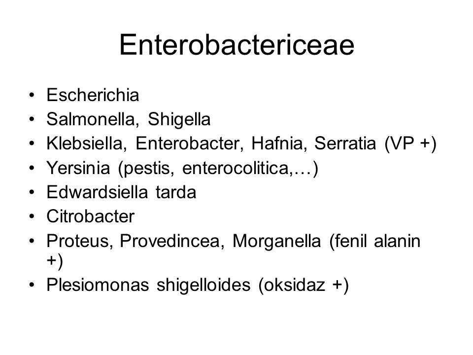 Enterobactericeae Escherichia Salmonella, Shigella