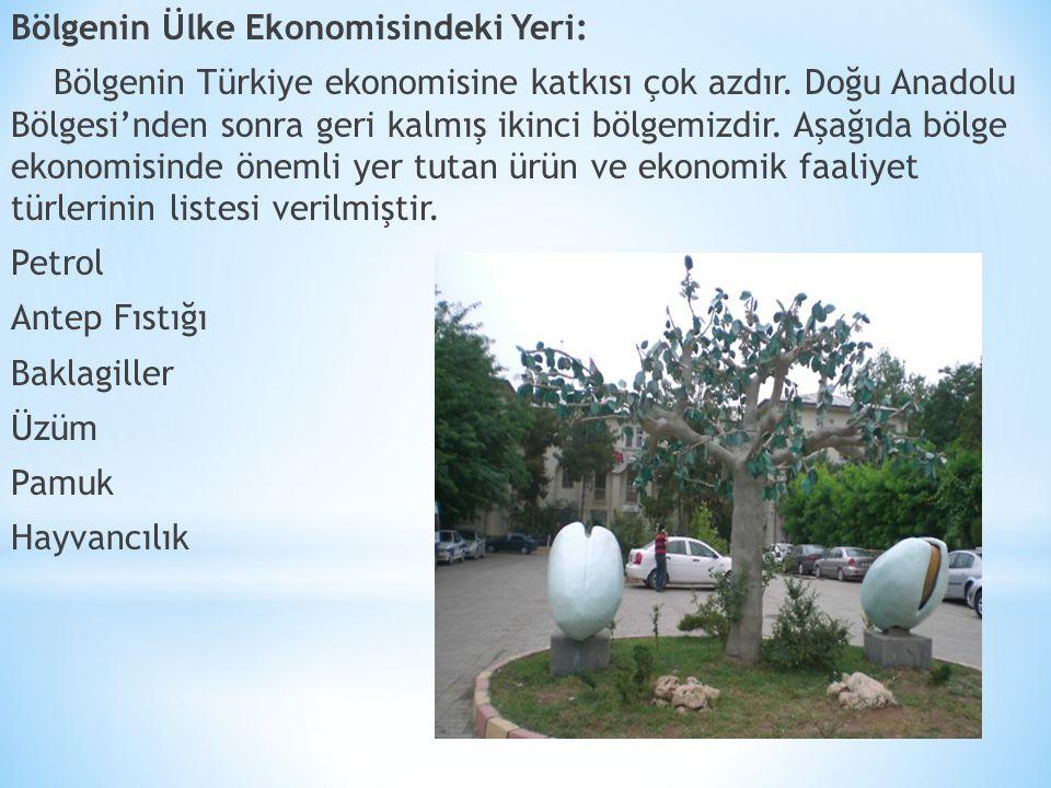 Bölgenin Ülke Ekonomisindeki Yeri: Bölgenin Türkiye ekonomisine katkısı çok azdır.