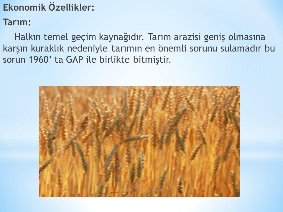 Ekonomik Özellikler: Tarım: Halkın temel geçim kaynağıdır