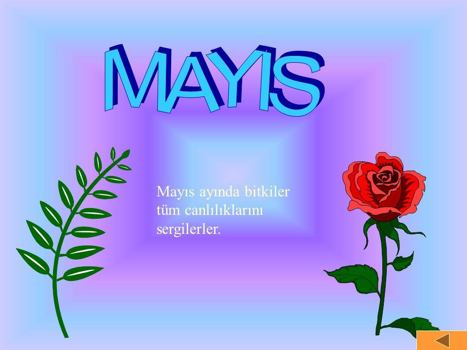 MAYIS Mayıs ayında bitkiler tüm canlılıklarını sergilerler.