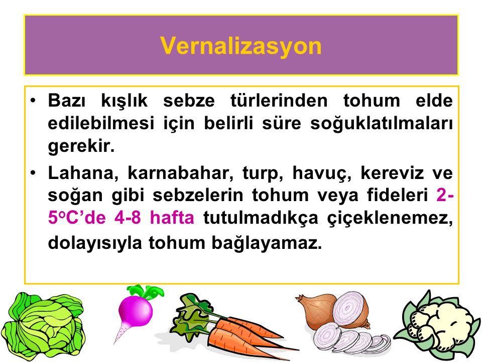 Vernalizasyon Bazı kışlık sebze türlerinden tohum elde edilebilmesi için belirli süre soğuklatılmaları gerekir.