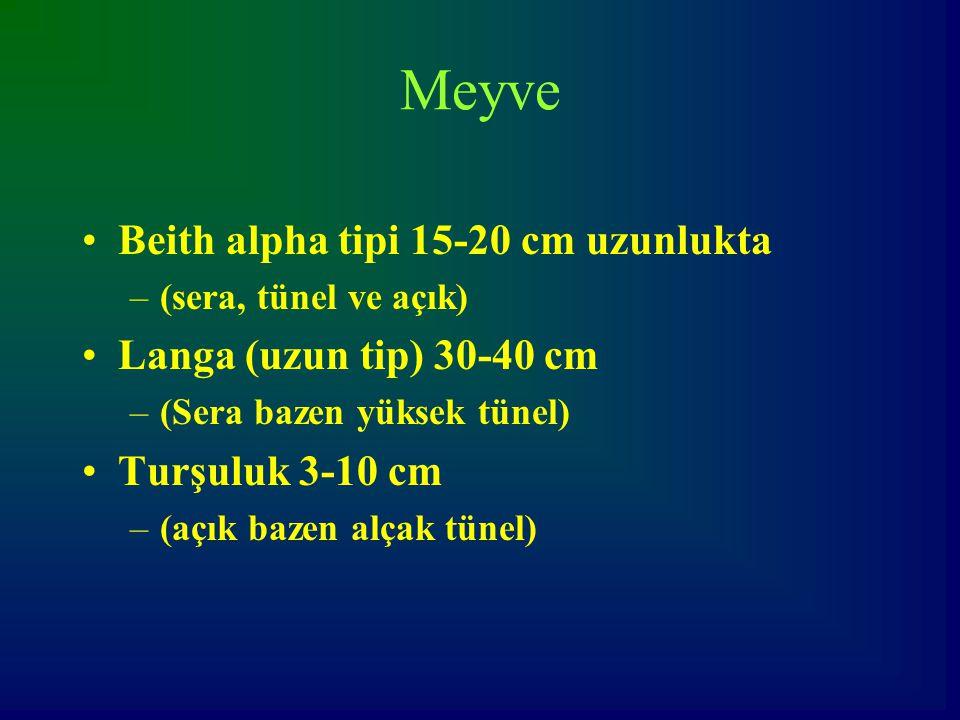 Meyve Beith alpha tipi 15-20 cm uzunlukta Langa (uzun tip) 30-40 cm