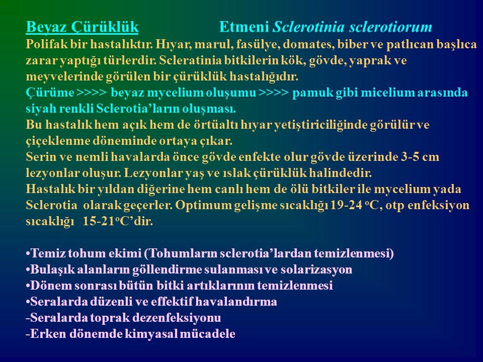 Beyaz Çürüklük Etmeni Sclerotinia sclerotiorum