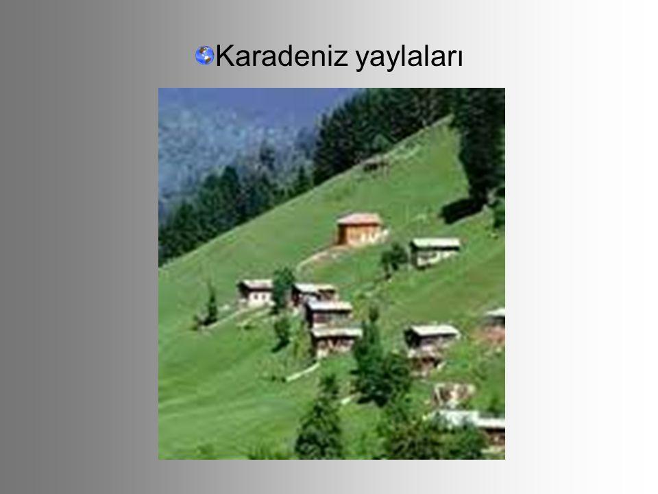 Karadeniz yaylaları