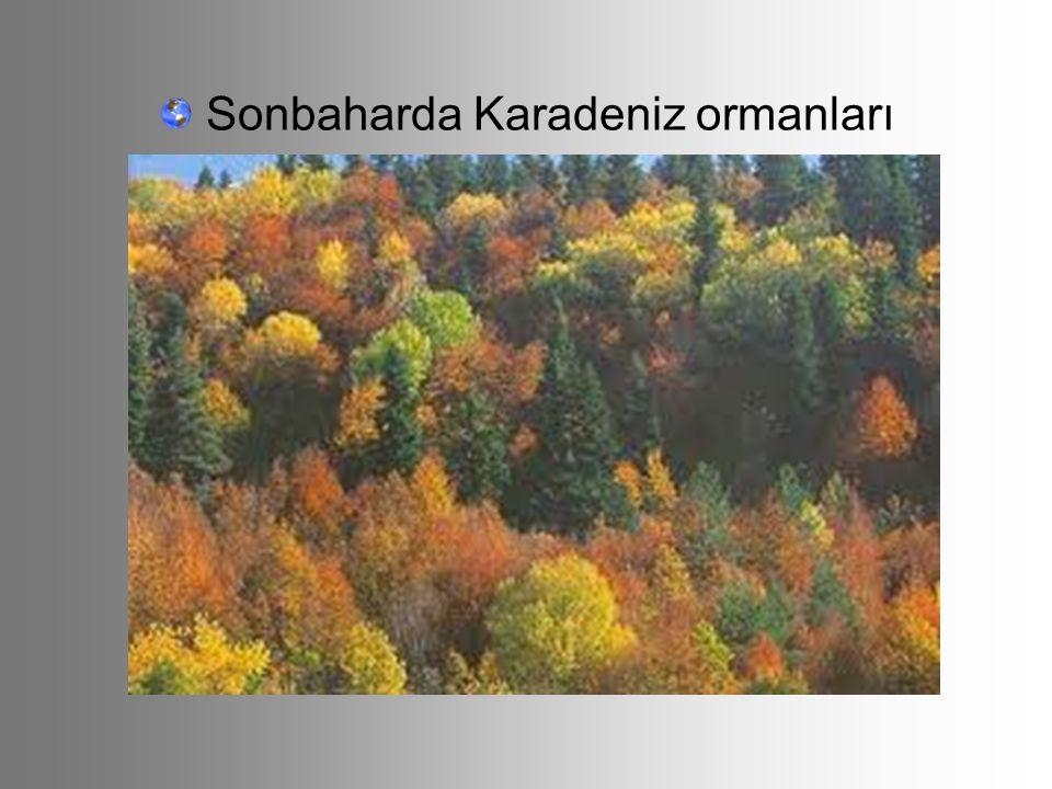 Sonbaharda Karadeniz ormanları
