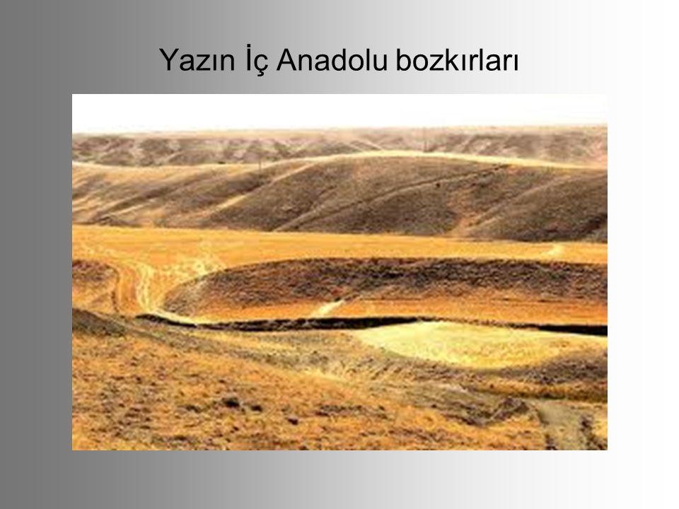 Yazın İç Anadolu bozkırları