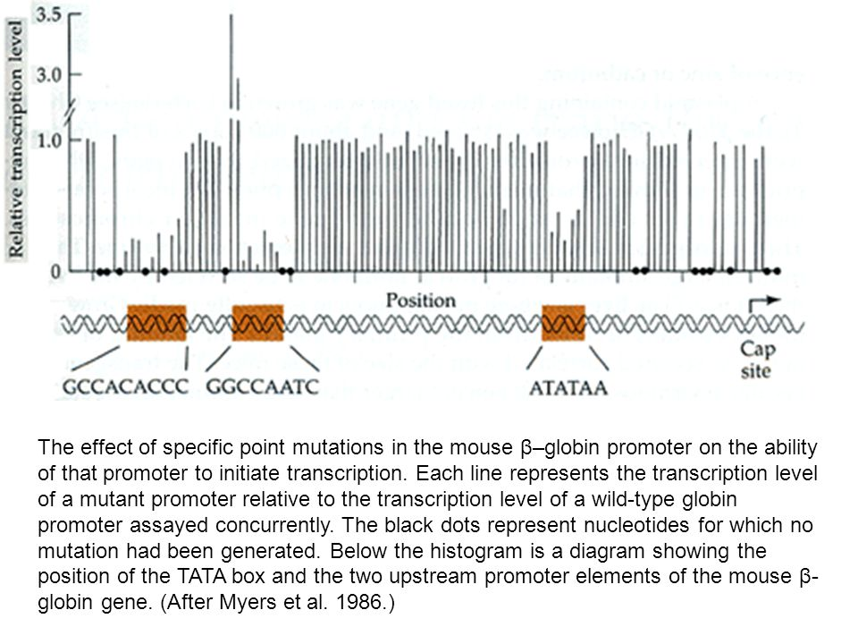 The effect of specific point mutations in the mouse β–globin promoter on the ability of that promoter to initiate transcription.
