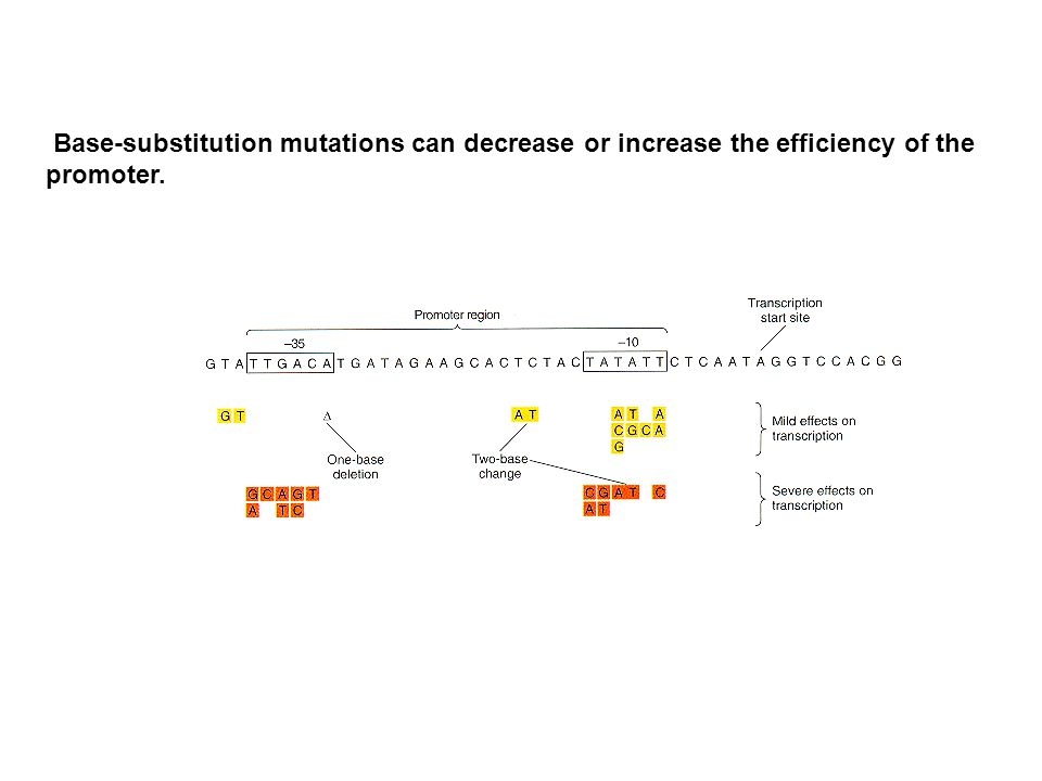 Base-substitution mutations can decrease or increase the efficiency of the promoter.