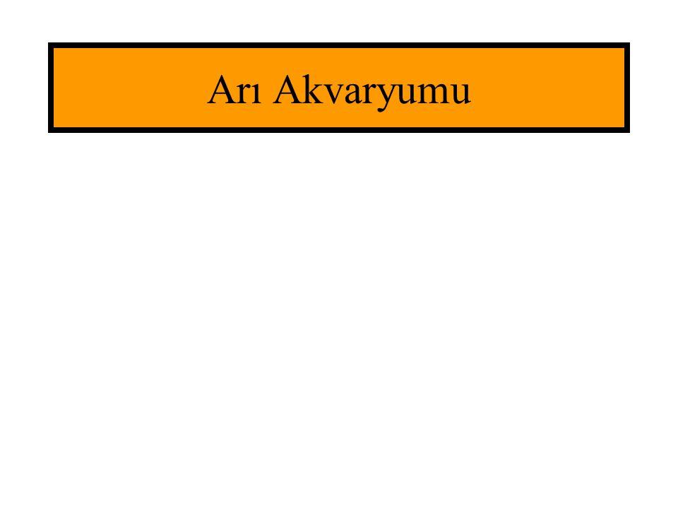 Arı Akvaryumu