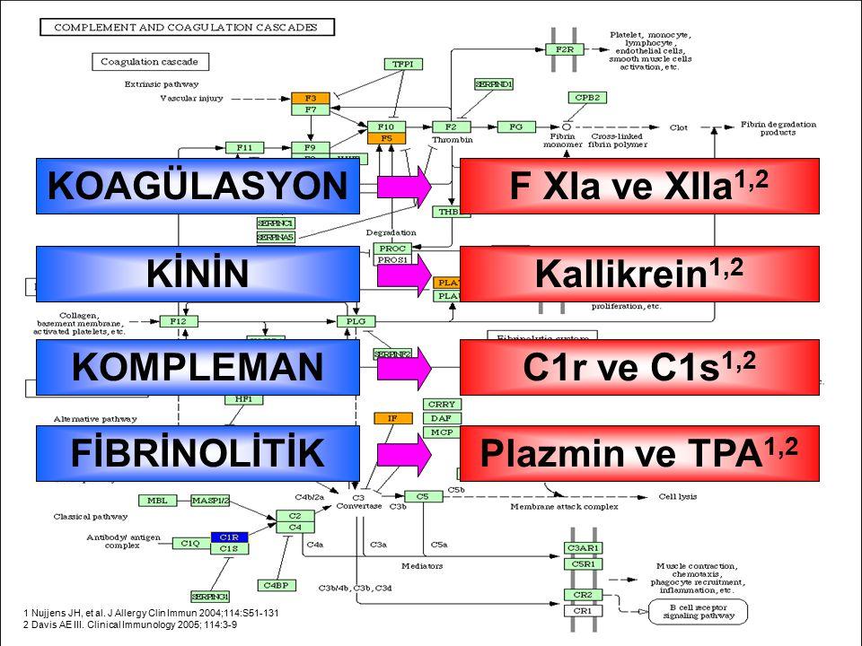 F XIa ve XIIa1,2 KOAGÜLASYON Kallikrein1,2 KİNİN C1r ve C1s1,2