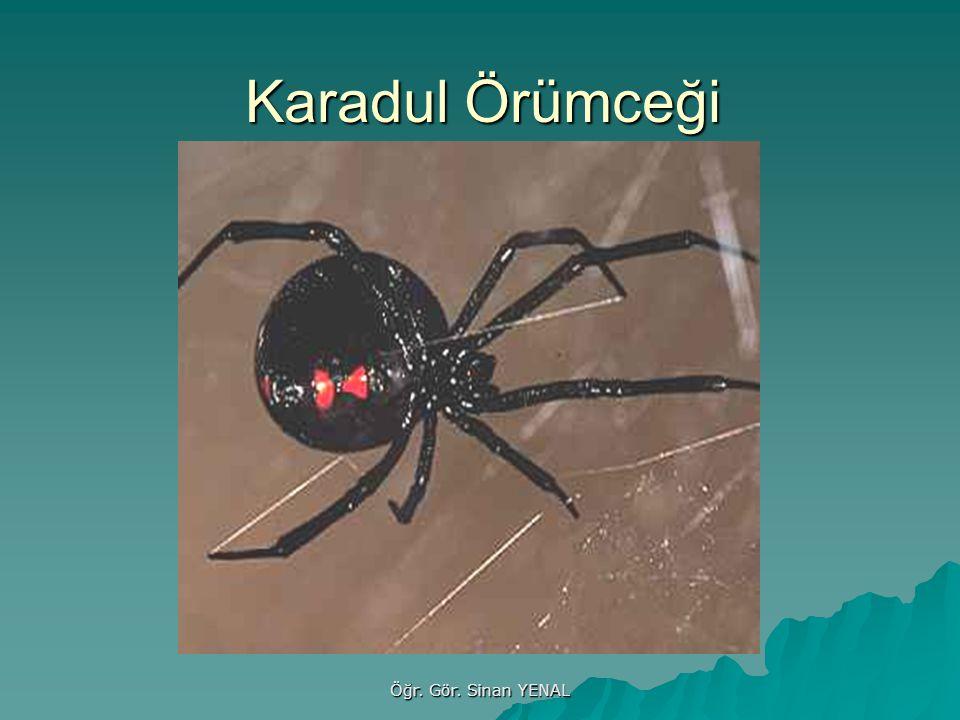 Karadul Örümceği Öğr. Gör. Sinan YENAL