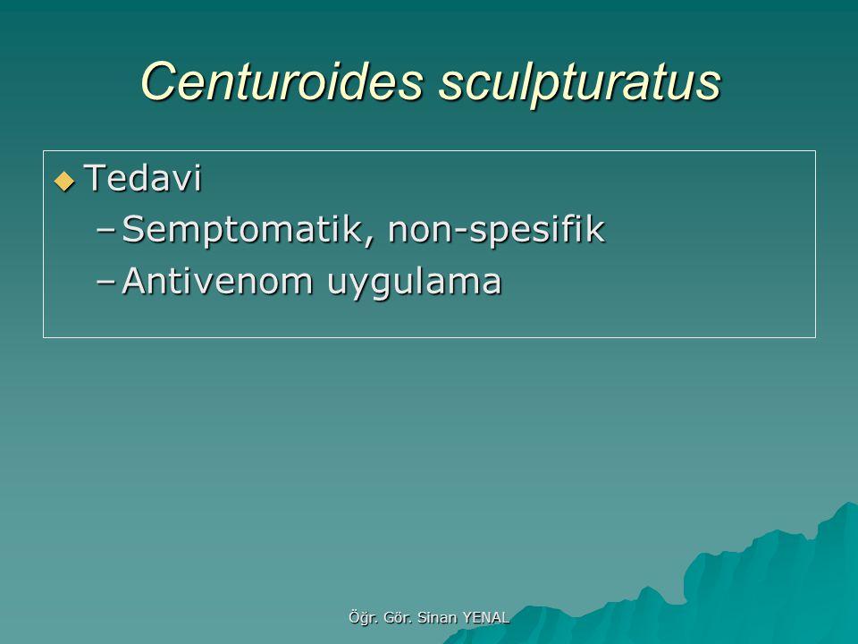Centuroides sculpturatus