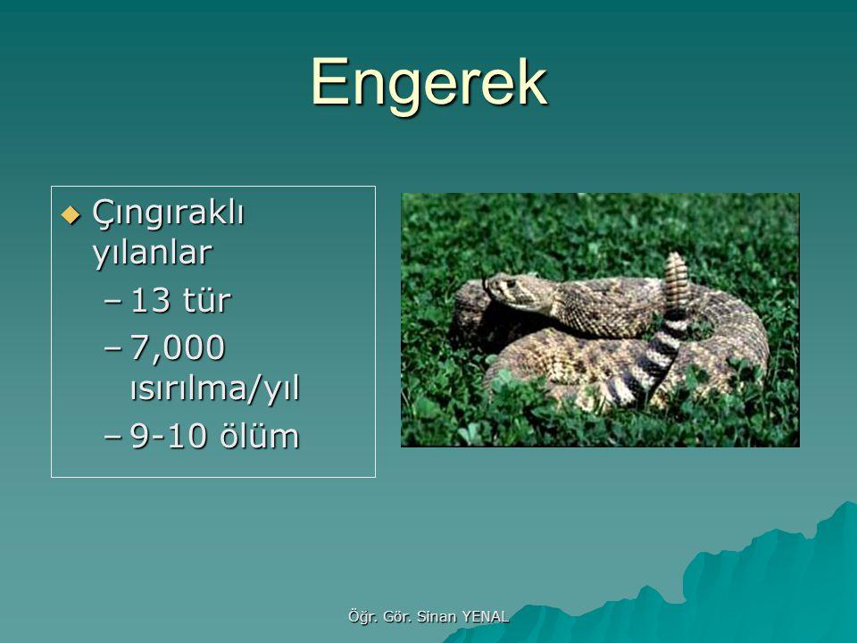 Engerek Çıngıraklı yılanlar 13 tür 7,000 ısırılma/yıl 9-10 ölüm