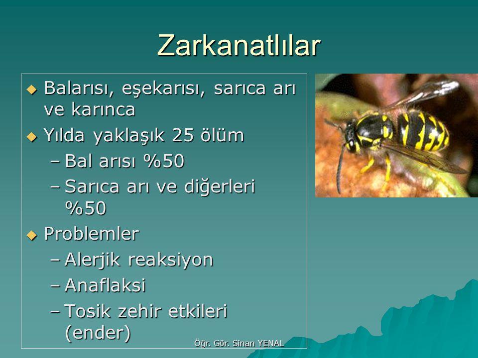 Zarkanatlılar Balarısı, eşekarısı, sarıca arı ve karınca