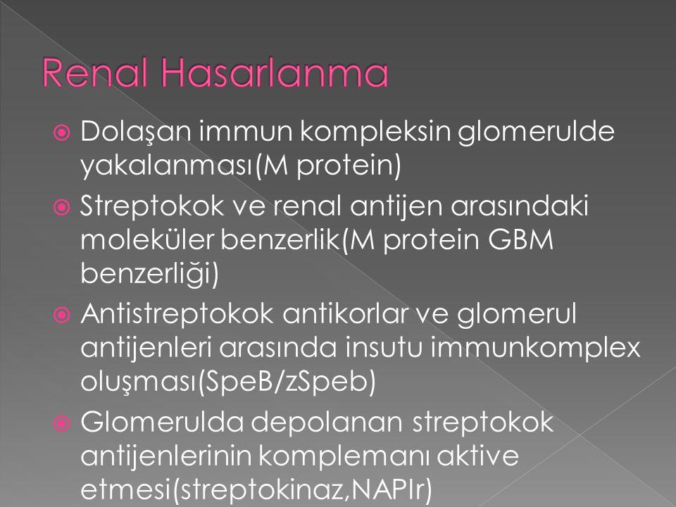 Renal Hasarlanma Dolaşan immun kompleksin glomerulde yakalanması(M protein)