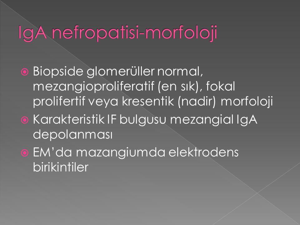 IgA nefropatisi-morfoloji