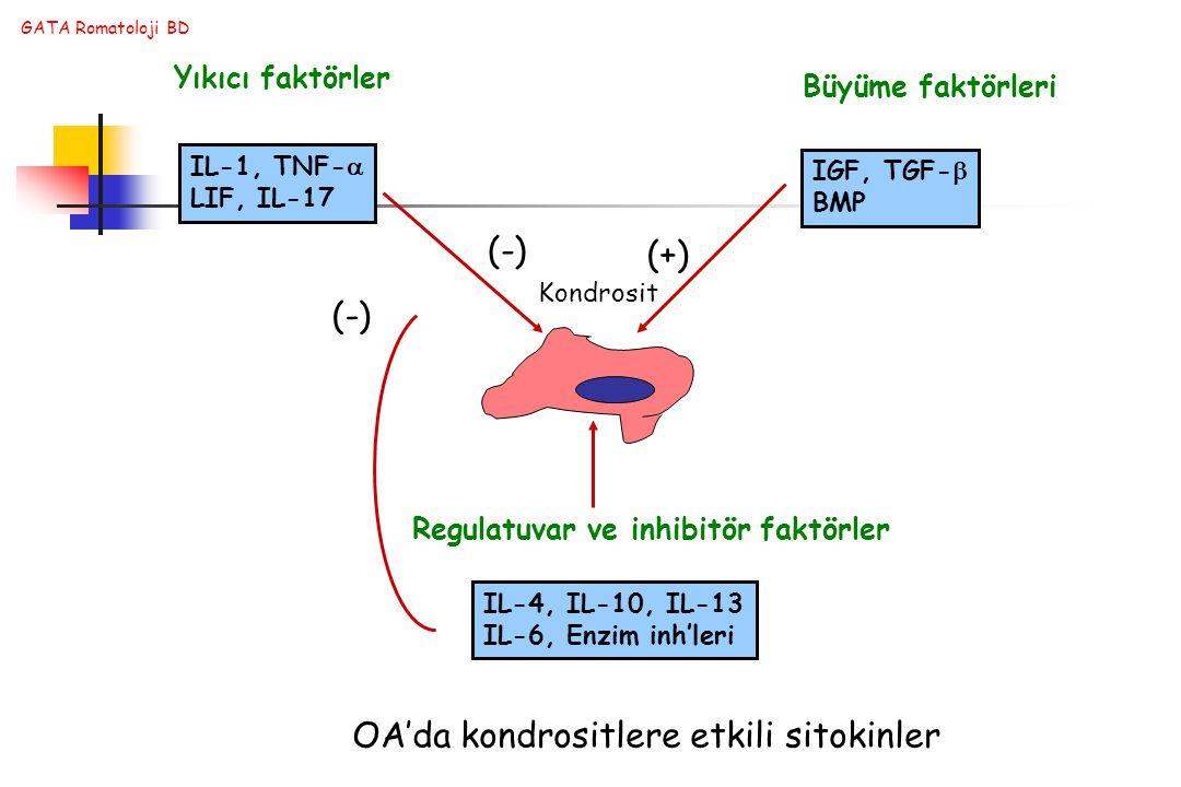 OA'da kondrositlere etkili sitokinler