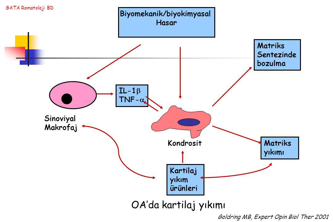 Biyomekanik/biyokimyasal