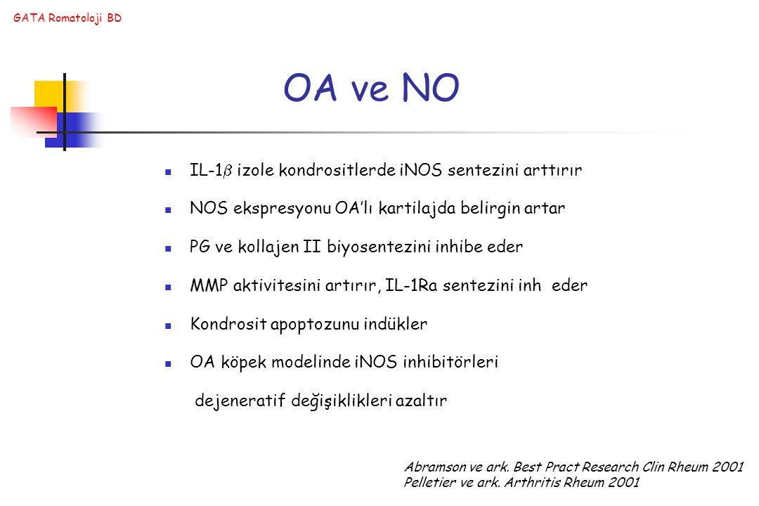 OA ve NO IL-1 izole kondrositlerde iNOS sentezini arttırır