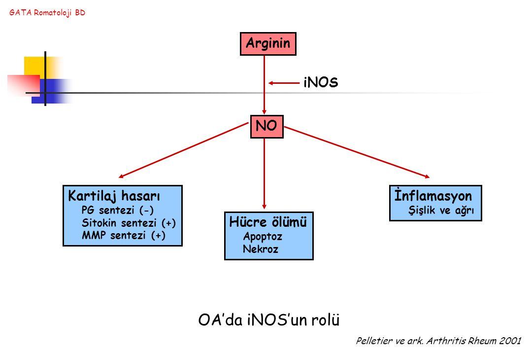 OA'da iNOS'un rolü Arginin iNOS NO Kartilaj hasarı İnflamasyon