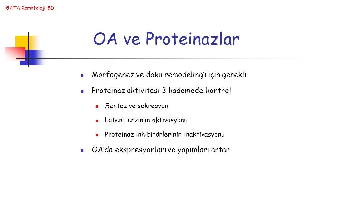 OA ve Proteinazlar Morfogenez ve doku remodeling'i için gerekli