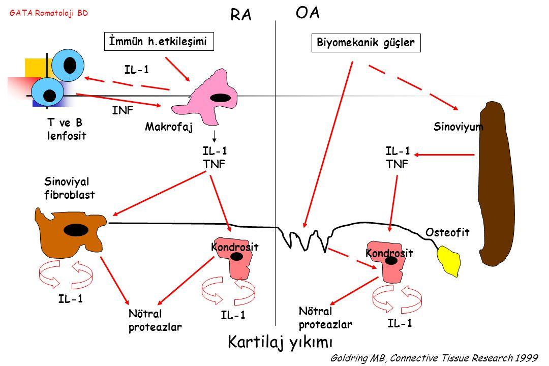OA RA Kartilaj yıkımı İmmün h.etkileşimi Biyomekanik güçler IL-1 INF