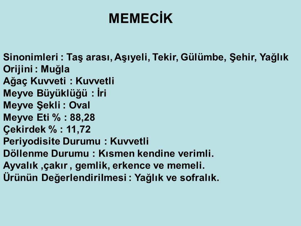 MEMECİK