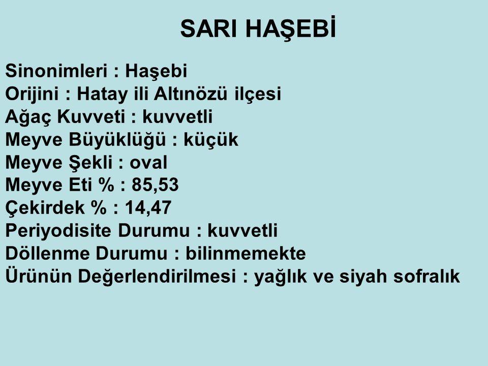 SARI HAŞEBİ