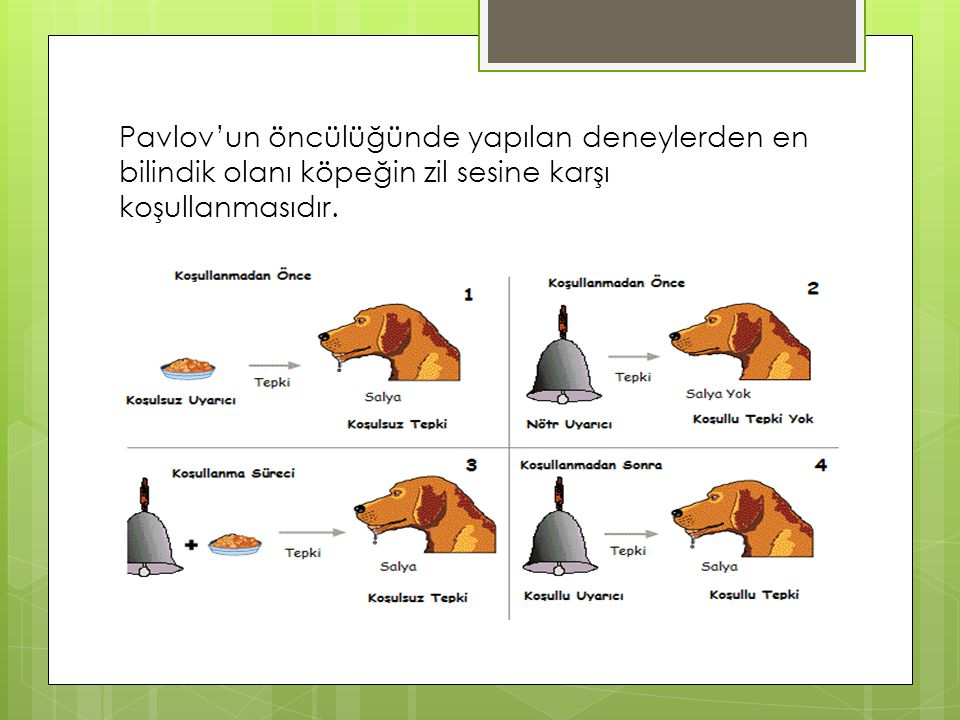 Pavlov'un öncülüğünde yapılan deneylerden en bilindik olanı köpeğin zil sesine karşı koşullanmasıdır.