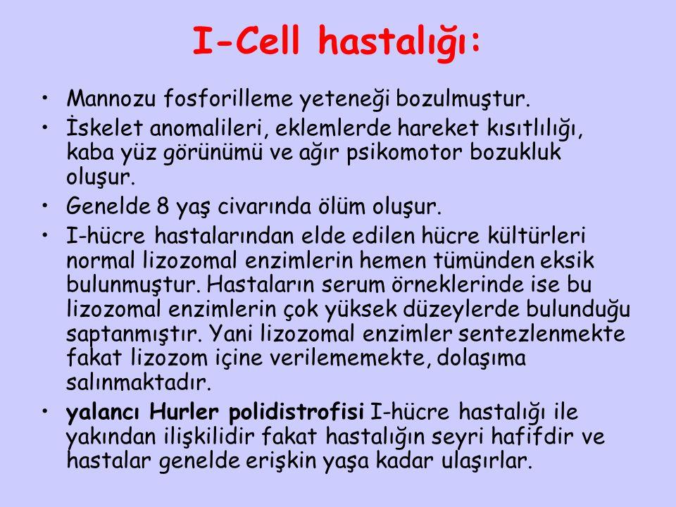 I-Cell hastalığı: Mannozu fosforilleme yeteneği bozulmuştur.